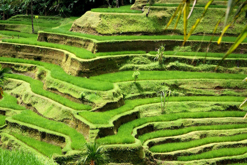 8 Natural Wonders in Bali, Indonesia - The Luxury Signature